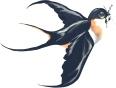 Swallow logo final
